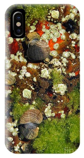 Shoals Tide Pool IPhone Case