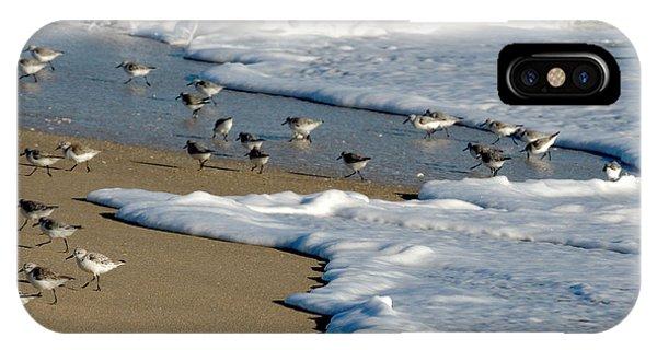Shore Birds South Florida IPhone Case