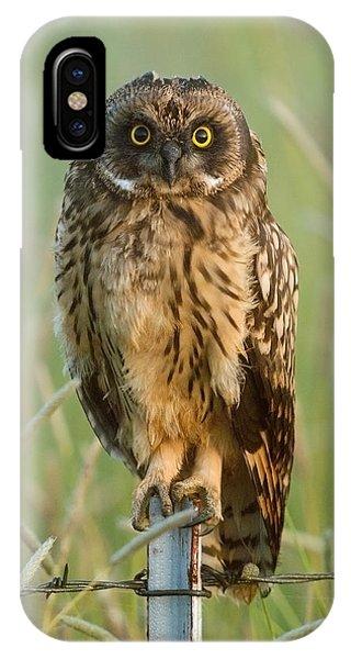Short-eared Owl IPhone Case