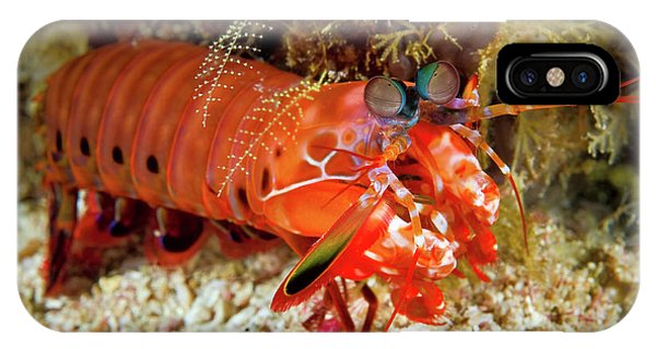 Shrimp On Ocean Floor, Raja Ampat IPhone Case