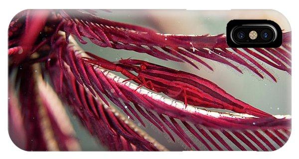 Shrimp On The Arm Of A Featherstar Phone Case by Scubazoo