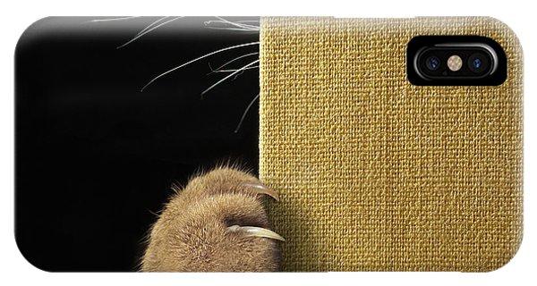 Humor iPhone Case - Shy Cat ... by Iryna Kuznetsova (iridi)