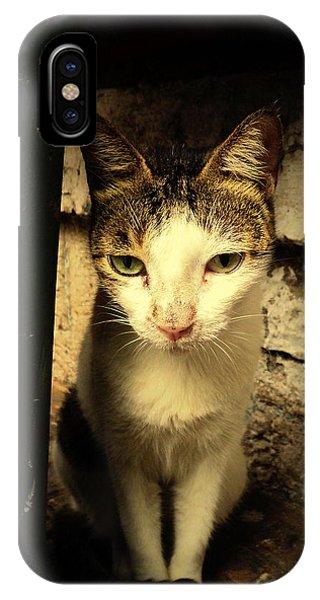 Shy Cat IPhone Case