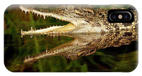Crocodile iPhone Case - Siamese Crocodile, Crocodylus by David Northcott