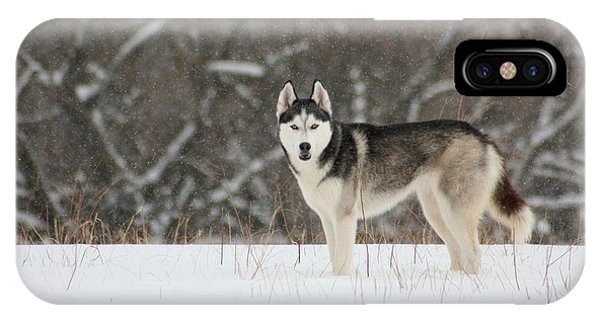 I've Been Spotted IPhone Case