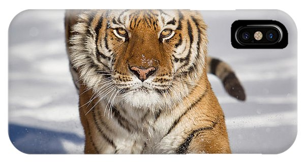 Siberian Tiger Coming Forward IPhone Case