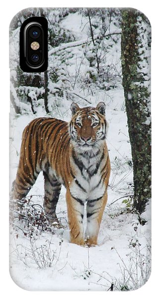 Siberian Tiger - Snow Wood IPhone Case