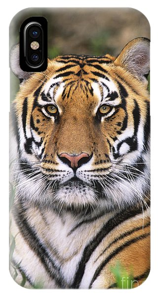 Siberian Tiger Staring Endangered Species Wildlife Rescue IPhone Case