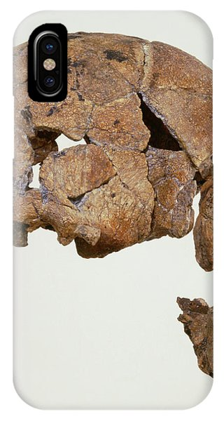Er iPhone Case - Side View Of Skull Of Homo Habilis (knm-er 1470) by John Reader/science Photo Library