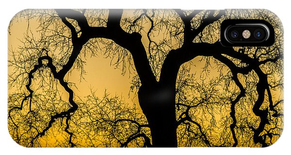 Silhouette Oak IPhone Case