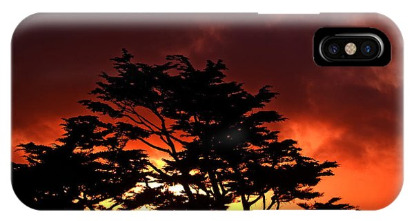 Cypress iPhone Case - Silhouetted Cypresses by Bill Gallagher