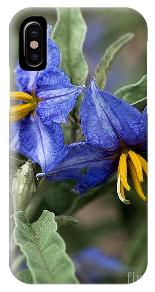 IPhone Case featuring the photograph Silver Leaf Blooms by Mae Wertz