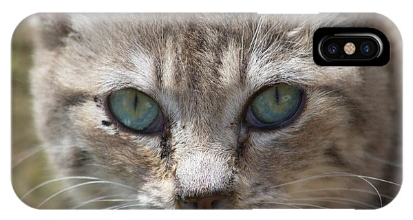 Silver Tabby But What Color Eyes IPhone Case