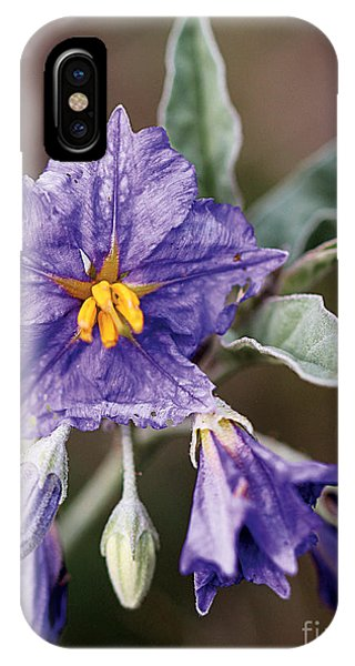Silverleaf Nightshade IPhone Case