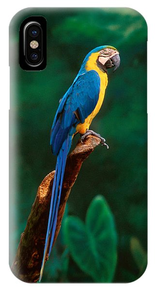Singapore Macaw At Jurong Bird Park  IPhone Case