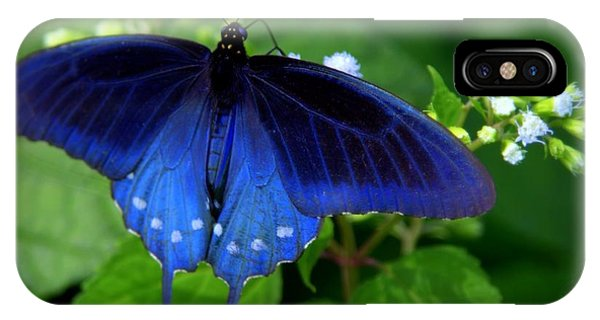 Pollination iPhone Case - Singing The Blues by Karen Wiles