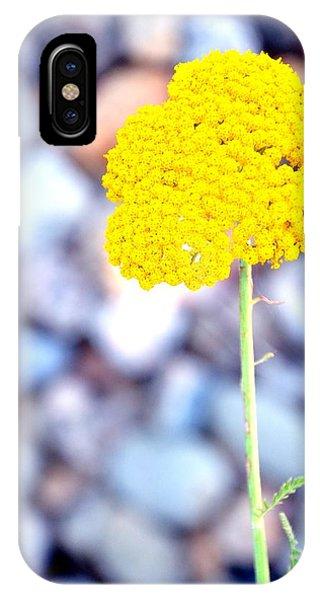 Single 16139 IPhone Case