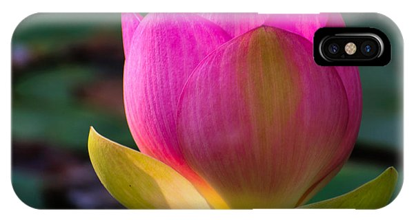 Single Blossum IPhone Case