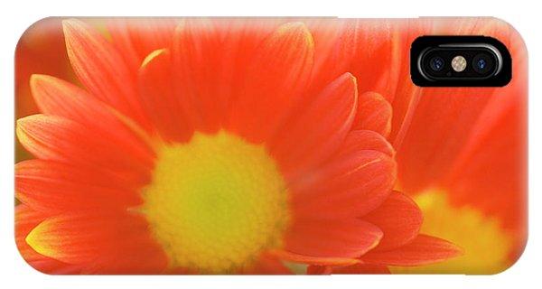 Hybrid iPhone Case - Single Chrysanthemum 'macho' by Maria Mosolova/science Photo Library