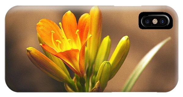 Single Kaffir Lily Bloom IPhone Case