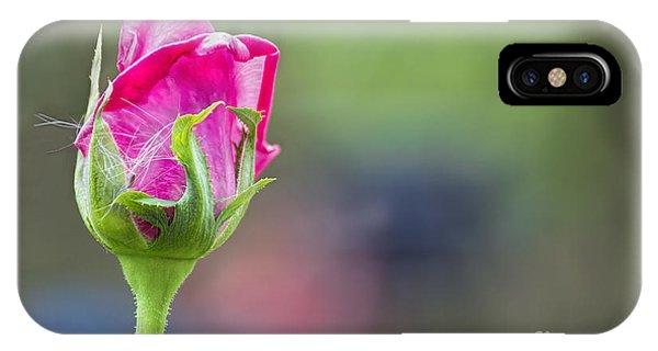 Single Pink Rose Bud IPhone Case