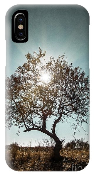 Sun iPhone Case - Single Tree by Carlos Caetano