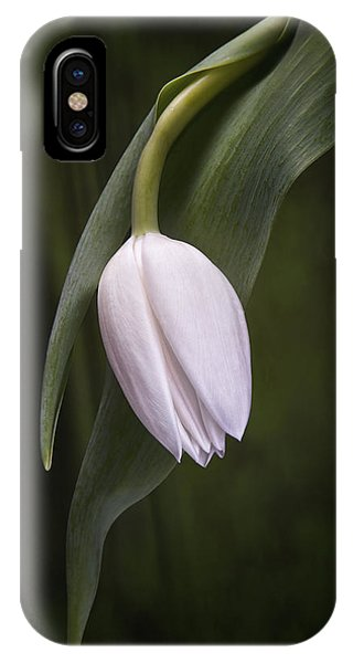 Blossoms iPhone Case - Single Tulip Still Life by Tom Mc Nemar