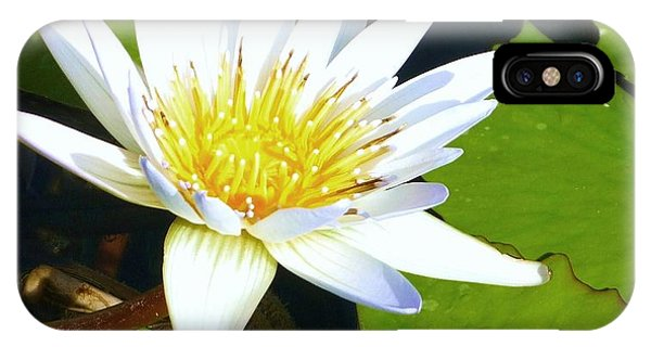 iPhone Case - Single White Water Lily by Stephanie Callsen