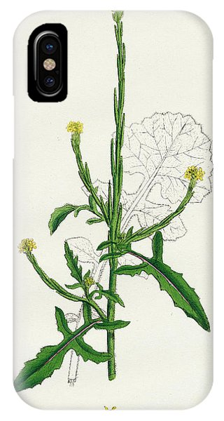 Mustard iPhone Case - Sisymbrium Officinale Common Hedge-mustard by English School