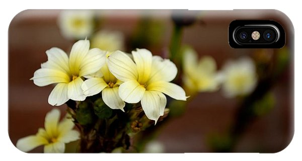 Sisyrinchium Striatum IPhone Case