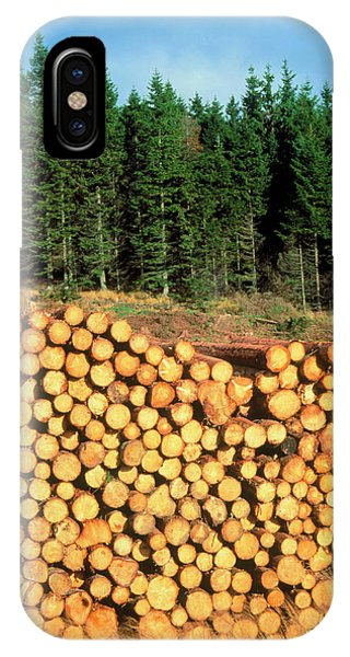 Spruce iPhone Case - Sitka Spruce And Harvested Timber by Simon Fraser/science Photo Library