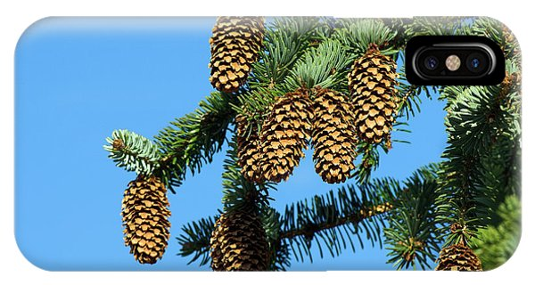 Spruce iPhone Case - Sitka Spruce (picea Sitchensis) by Duncan Shaw/science Photo Library