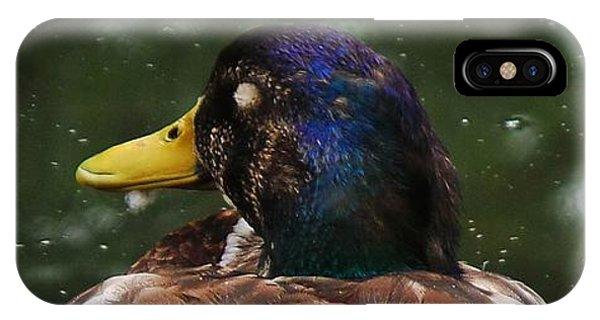 Sitting Duck IPhone Case