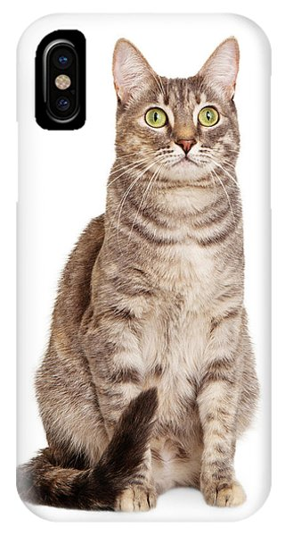 Sitting Gray Tabby Cat IPhone Case