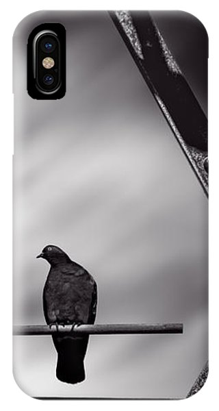Pigeon iPhone Case - Sitting On A Stick by Bob Orsillo