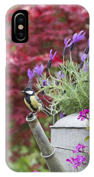 Titmouse iPhone Case - Sitting Pretty by Tim Gainey
