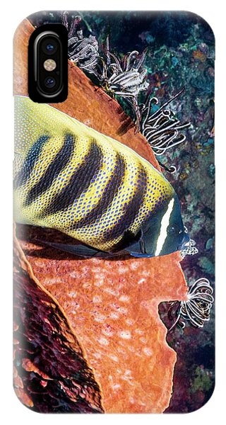 Ichthyology iPhone Case - Sixbar Angelfish On A Reef by Georgette Douwma