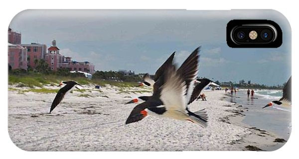 Black Skimmers At Don Cesar IPhone Case