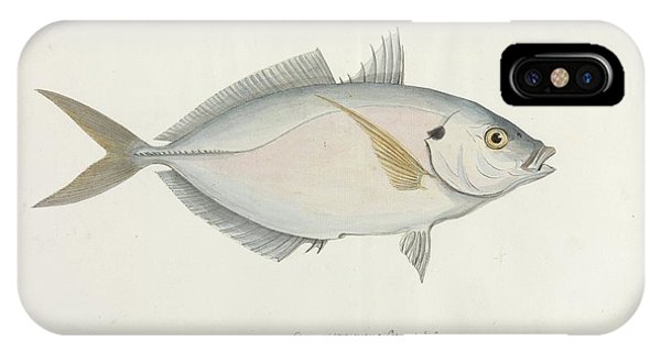 Skipjack iPhone Case - Skipjack Of The Settlers by Natural History Museum, London/science Photo Library