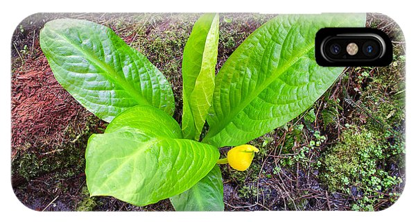 Skunk Cabbage IPhone Case