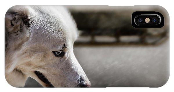 Sled Dog iPhone Case - Sled Dog by Bob Orsillo