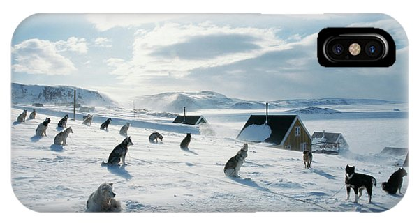 Sled Dog iPhone Case - Sled Dog Teams by Simon Fraser/science Photo Library