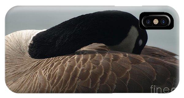 Sleeping Canada Goose IPhone Case