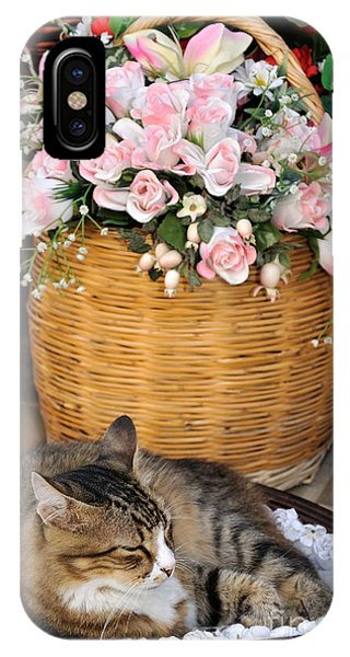 Sleeping Cat At Flower Shop IPhone Case