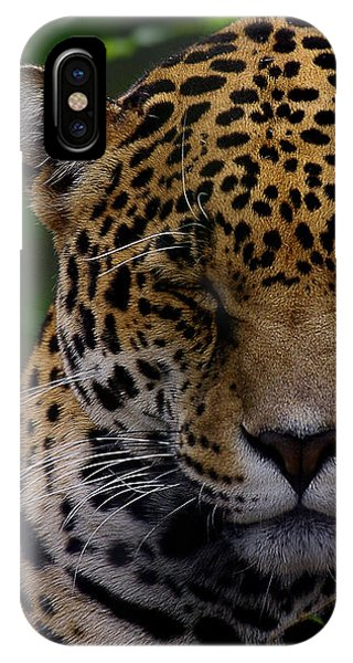 Sleeping Jaguar IPhone Case