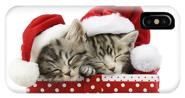 Tabby iPhone Case - Sleeping Kittens In Presents by MGL Meiklejohn Graphics Licensing