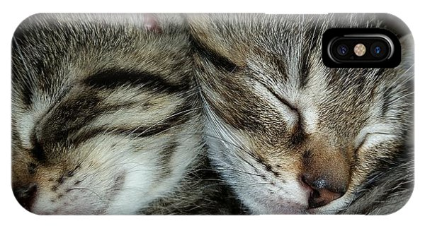 iPhone Case - Sleeping Kittens by Scott Decker