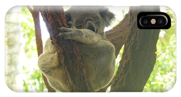 Sleeping Koala In Tree IPhone Case