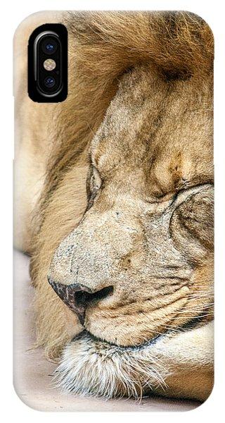 Sleeping Lion IPhone Case