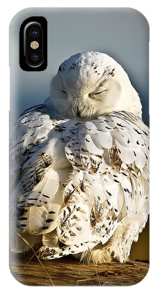 Sleeping Snowy Owl IPhone Case